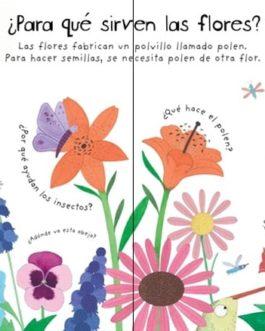 ¿Cómo crecen las flores?